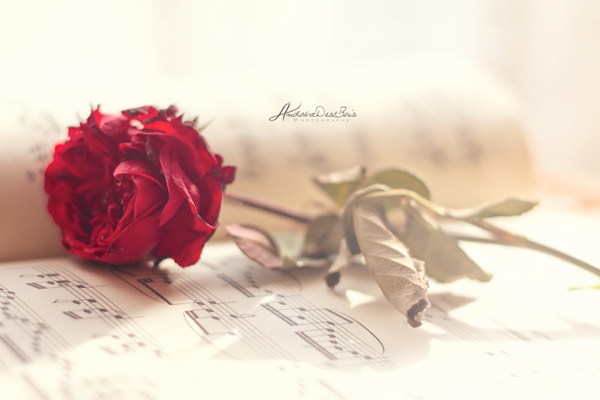 Musicale. by andokadesbois