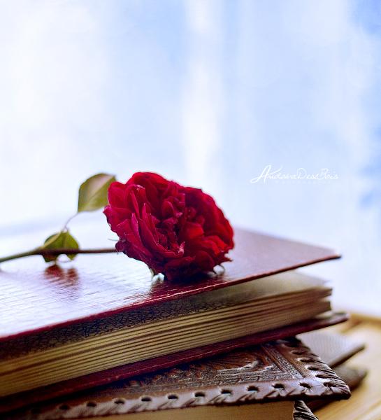 Romance Novel. by andokadesbois