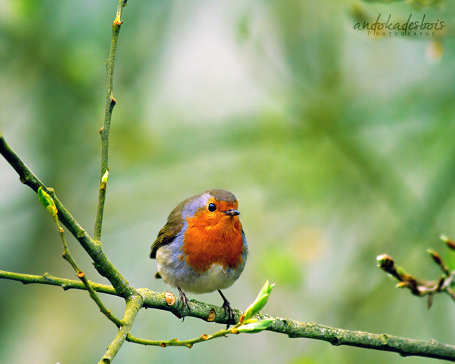 Bird. by andokadesbois