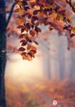 Leaf fall by andokadesbois