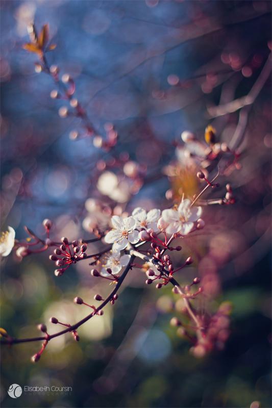 Pink Blossom. by andokadesbois
