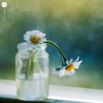 Springful. by andokadesbois