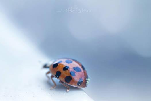 Mushroom ladybug