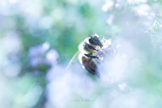 Blurry Bee
