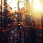 Autumn Feelings XXI