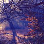 Autumn Feelings XXXVIII