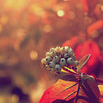 Autumn V by agatkk