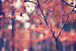 Autumn is here by agatkk