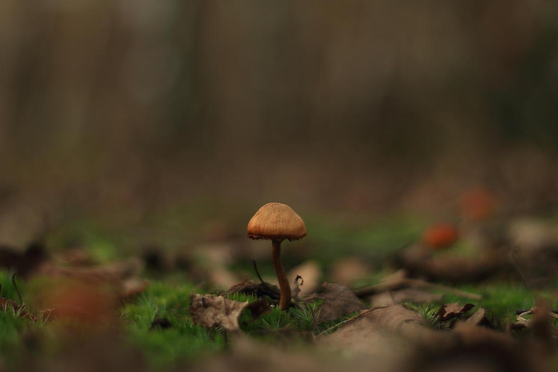fungi. by ColorfulLadybug