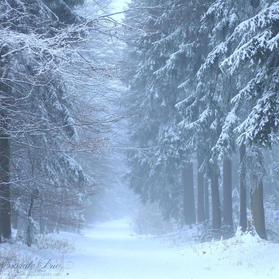 Winter Wonderland by ColorfulLadybug