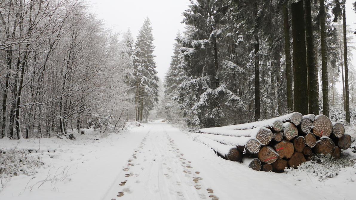 Winter Journey by ColorfulLadybug