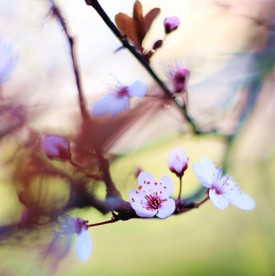 blooming by ColorfulLadybug