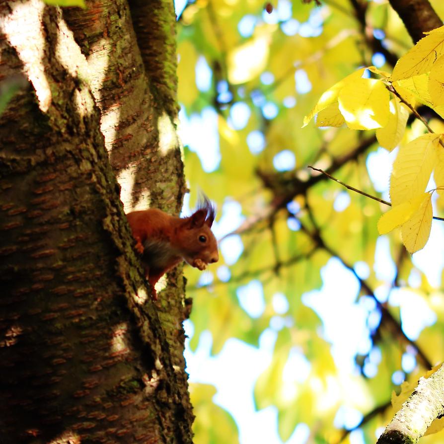 squirrel by ColorfulLadybug