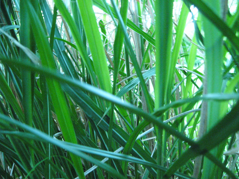 In The Zebra Grass 2 by NemoNameless