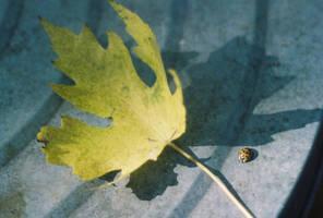 00000173_LadybugLeafShadow