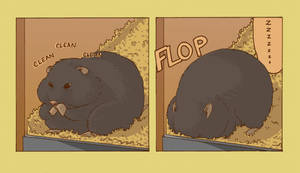 bear hamster