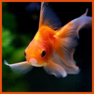 Geozz's Profile Picture
