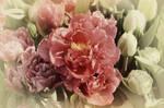 Tulip Magenta
