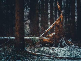 Morschenicher Wald. Schneeregen. Baumstumpf
