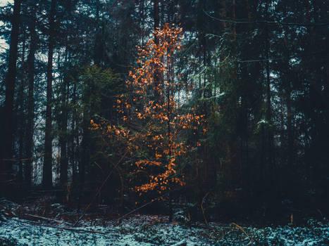 Morschenicher Wald. Schneeregen. Anders.