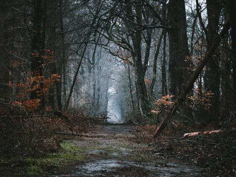 Januar Spaziergang - Morschenicher Wald