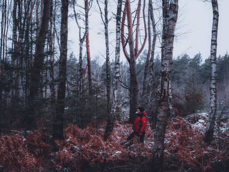 Morschenicher Wald - Winter Farn