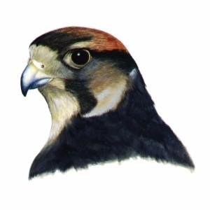 FalconNL's Profile Picture