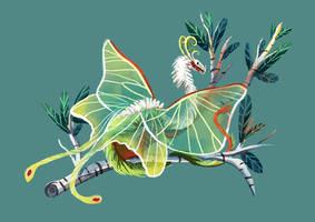 Tiny Insect Dragon - Lunar Moth