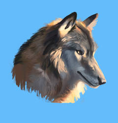Procreate Wolf Study by Loonaris