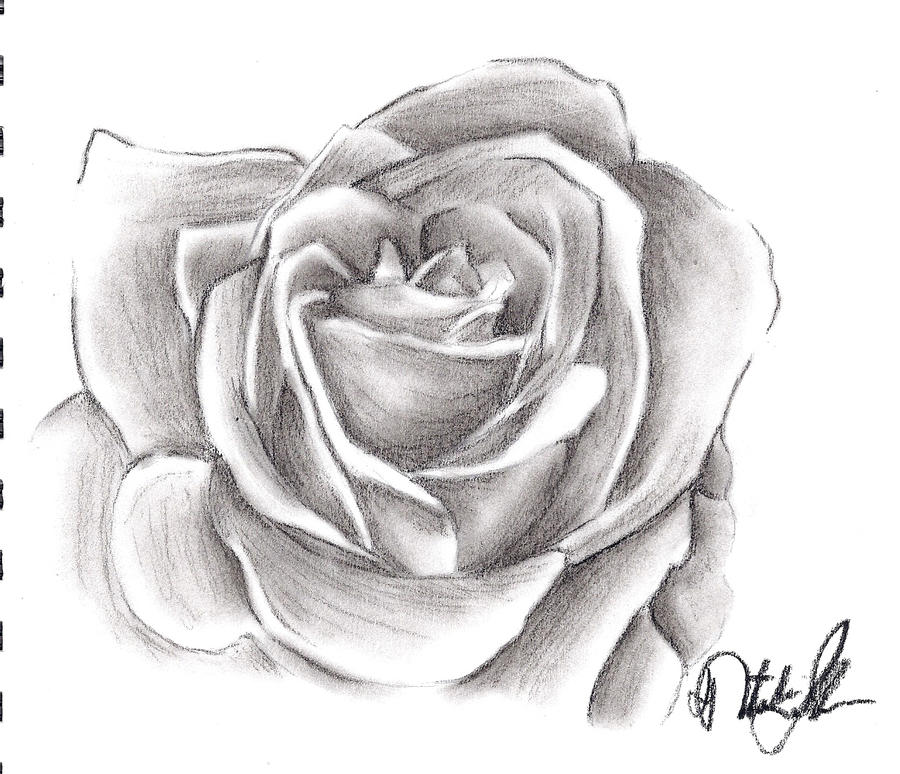 It is a picture of Remarkable Charcoal Rose Drawing