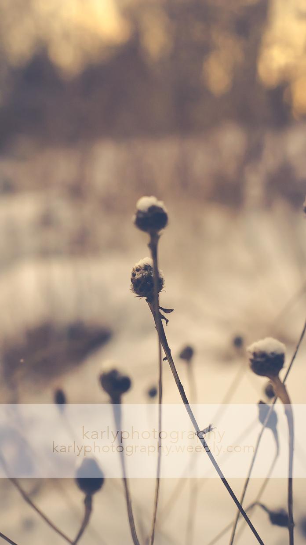 Wisps of winter by karliashi