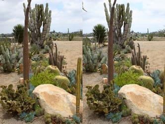 Desert Stereograph by Marazolas
