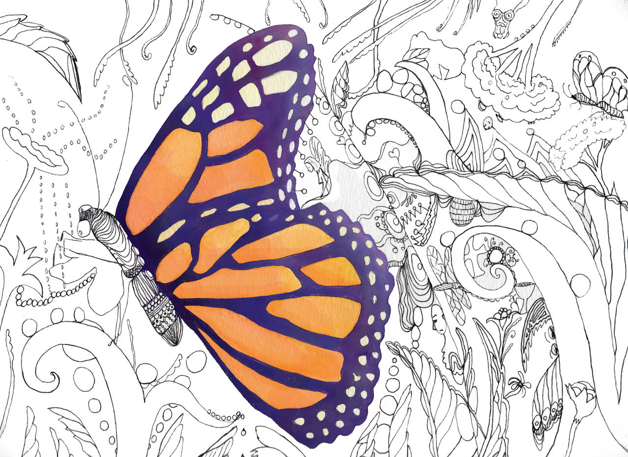 butterfly coloring book by catherineholcombe butterfly coloring book by catherineholcombe - Butterfly Coloring Book