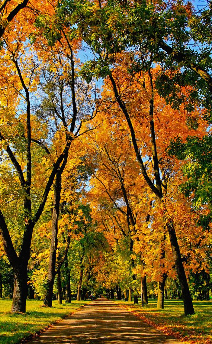 Autumn alley by Gwynbleid