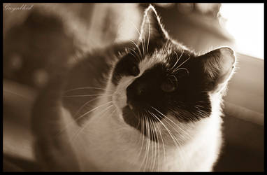 Smart cat by Gwynbleid