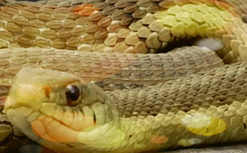 the snake in my backyard by akolojek on deviantart