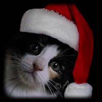 X-mas kittie by Moowna
