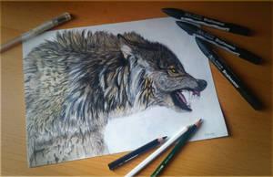 Wolf by DEpEchE-Ninara