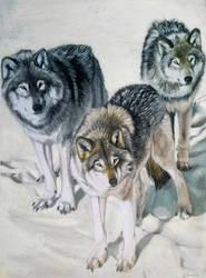 Wolf Gang by DEpEchE-Ninara