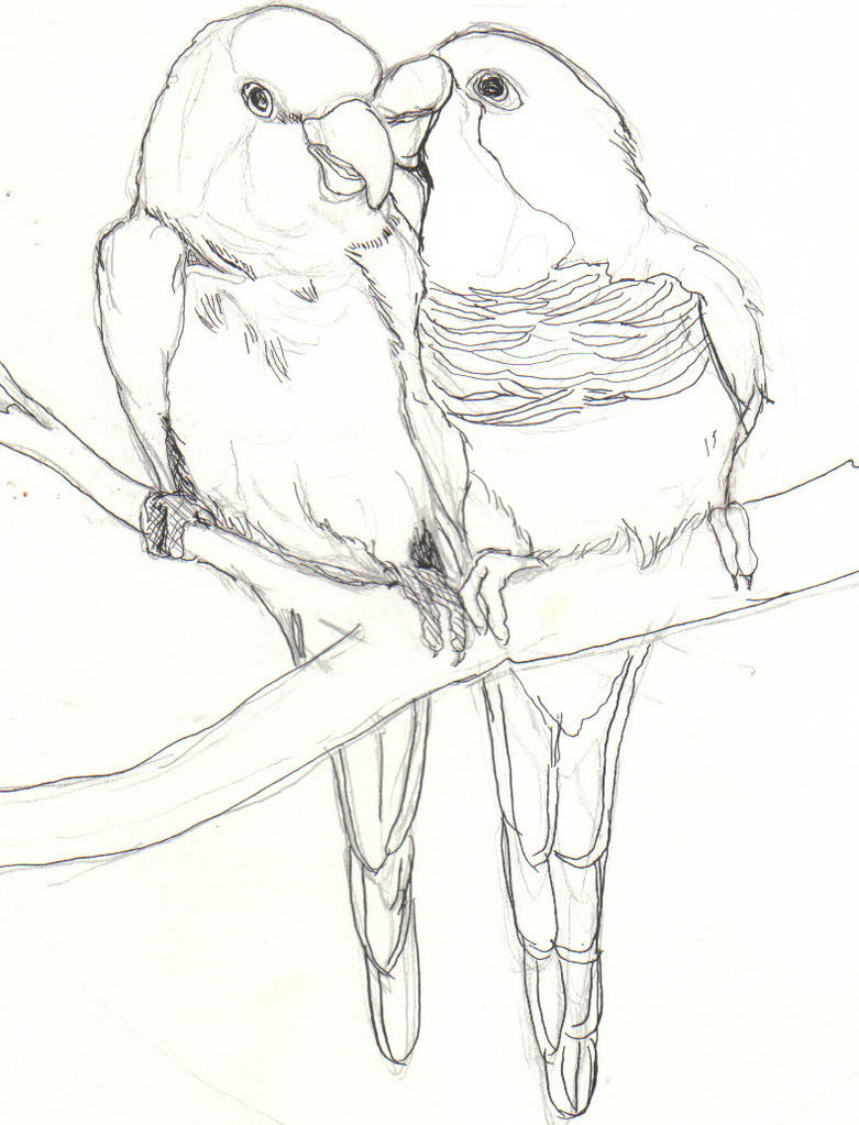 Love Bird Drawings In Pencil