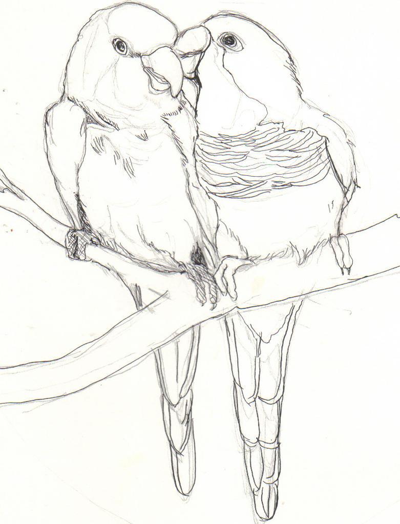 Love Bird Drawings In Pencil