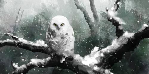 Snowy Owl by RafaelVinz