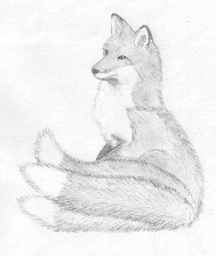 Avisia in Fox Form by Vixen525