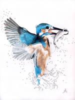 The Kingfisher by 4Gemsbok
