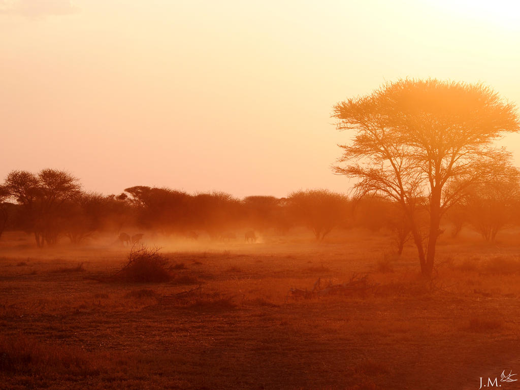 Stampede in the Dust by 4Gemsbok
