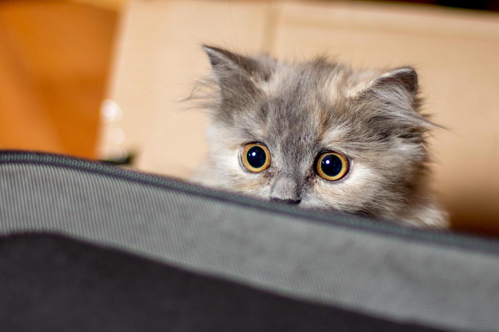 Xibalba the Cat by dage-photo