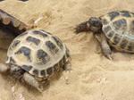 Turtles by roxan1930