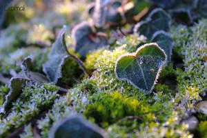 Frozen Ivy by Exornali