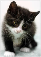 Socrate by blackcat