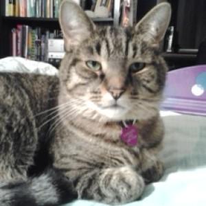 Miachiesnnekai's Profile Picture
